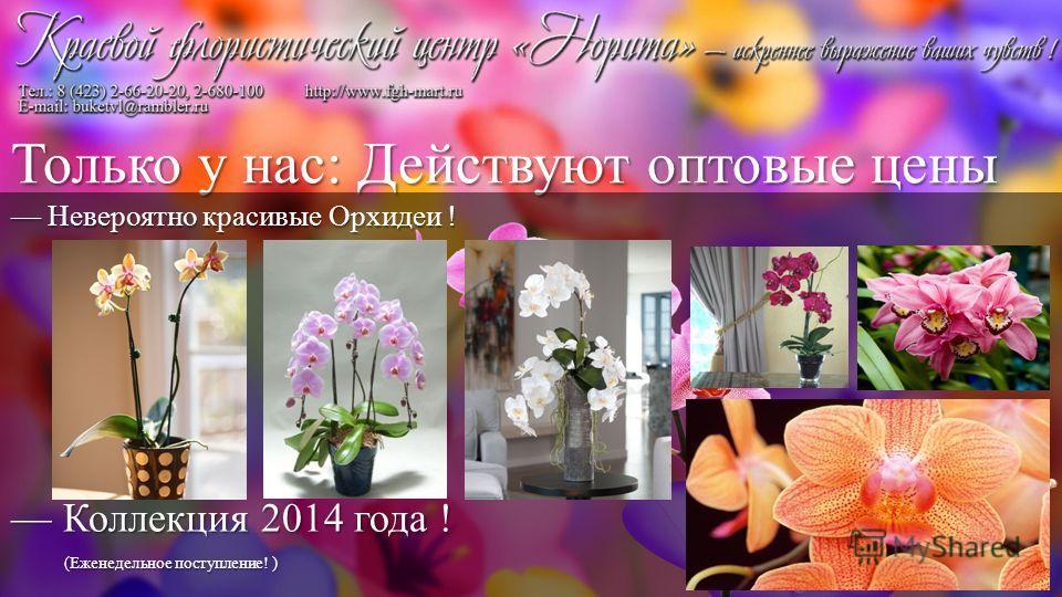 Невероятно красивые Орхидеи ! Коллекция 2014 года ! (Еженедельное поступление! )