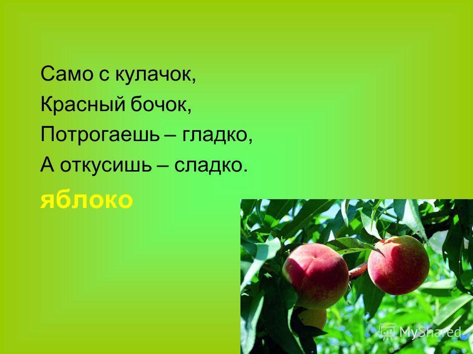 Само с кулачок, Красный бочок, Потрогаешь – гладко, А откусишь – сладко. яблоко