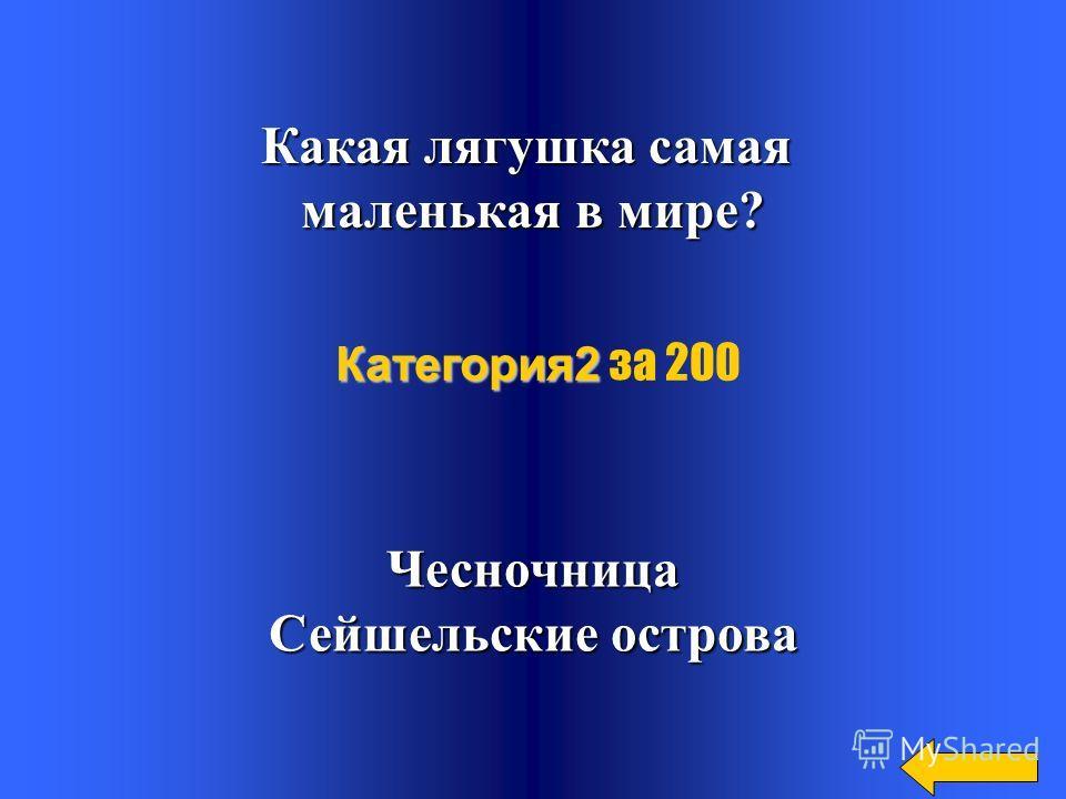 Что такое батрахология? Батрахоз-лягушкаЛогос-учение Категория2 Категория2 за 100