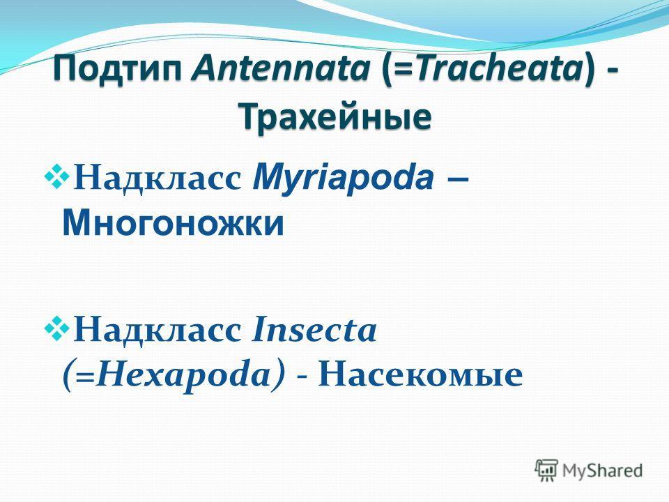 Подтип Antennata (=Tracheata) - Трахейные Надкласс Myriapoda – Многоножки Надкласс Insecta (=Hexapoda) - Насекомые
