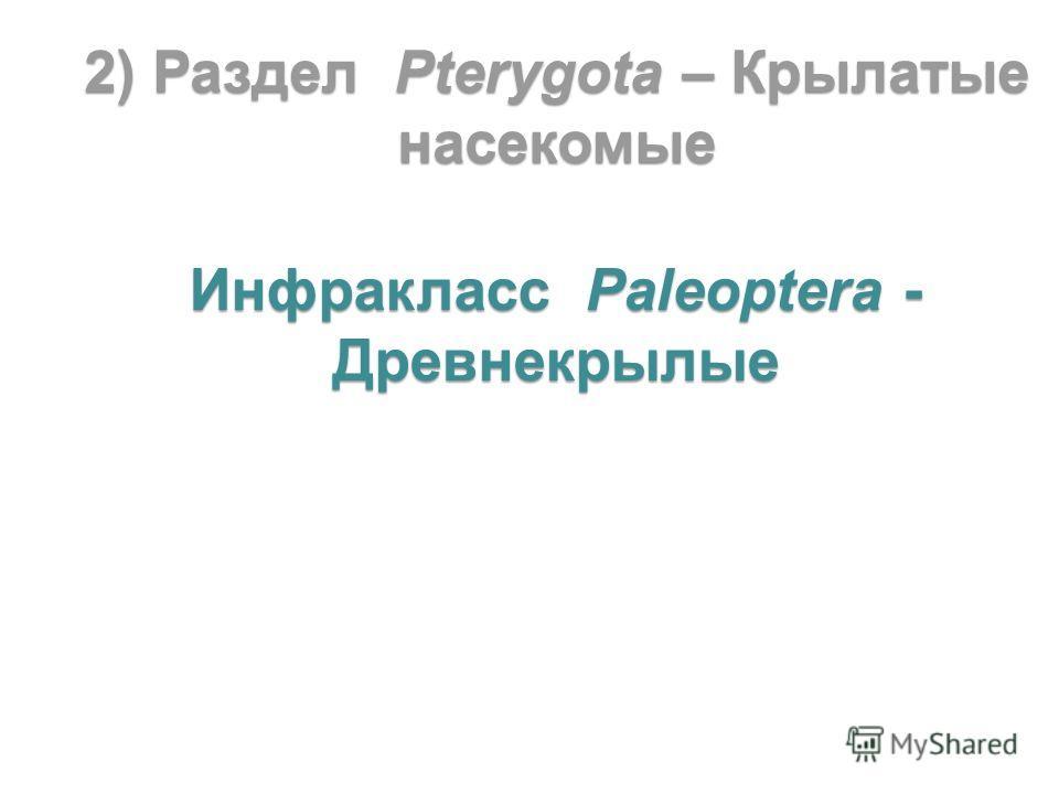 2) Раздел Pterygota – Крылатые насекомые Инфракласс Paleoptera - Древнекрылые