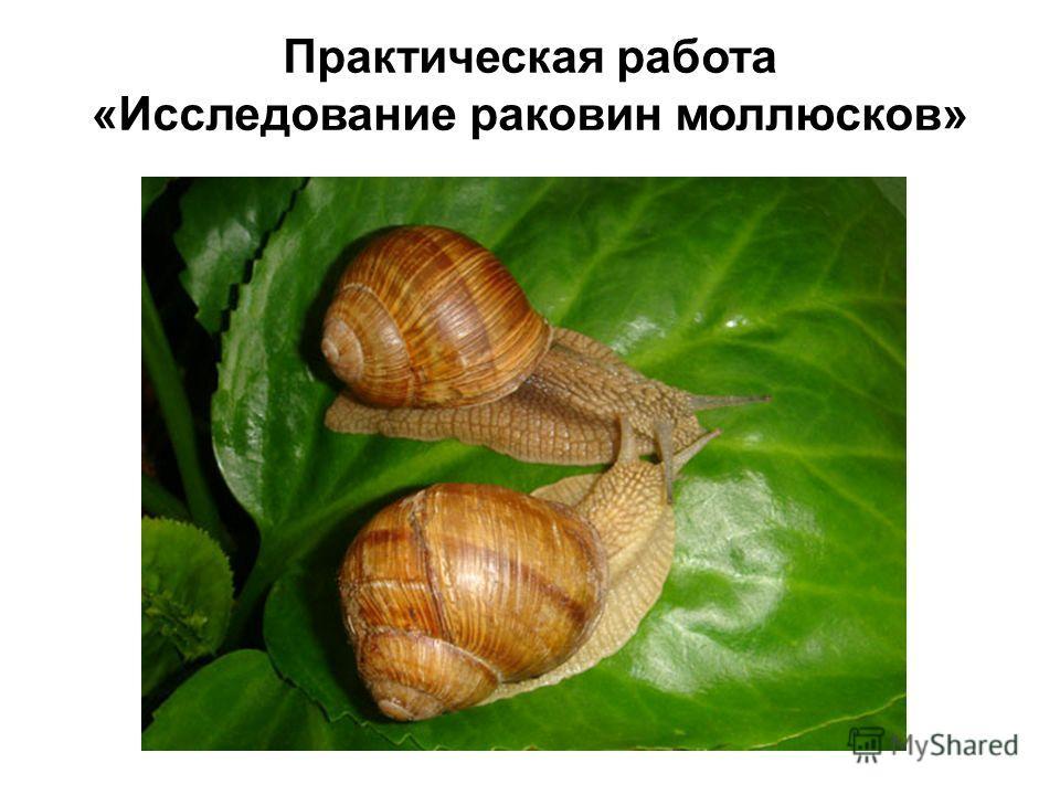 Практическая работа «Исследование раковин моллюсков»