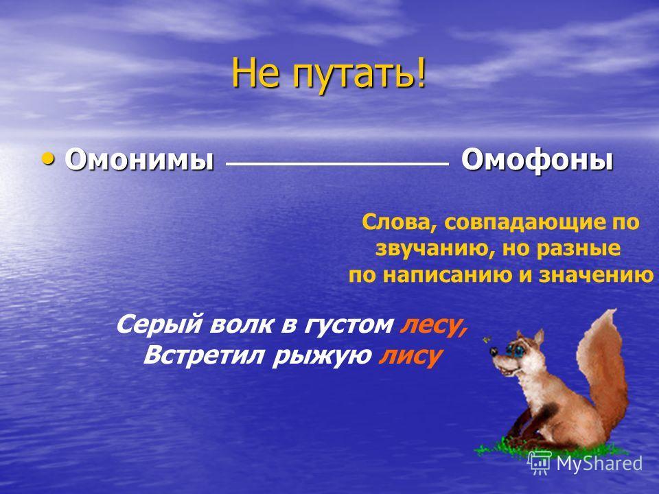 Не путать! Омонимы Омофоны Слова, совпадающие по звучанию, но разные по написанию и значению Серый волк в густом лесу, Встретил рыжую лису