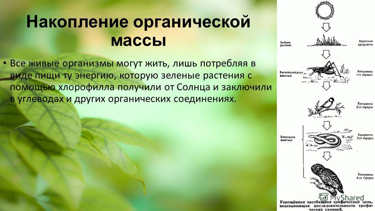 Накопление органической массы Все живые организмы могут жить, лишь потребляя в виде пищи ту энергию, которую зеленые растения с помощью хлорофилла получили от Солнца и заключили в углеводах и других органических соединениях.