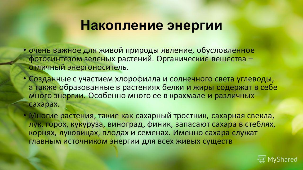 Накопление энергии очень важное для живой природы явление, обусловленное фотосинтезом зеленых растений. Органические вещества – отличный энергоноситель. Созданные с участием хлорофилла и солнечного света углеводы, а также образованные в растениях бел