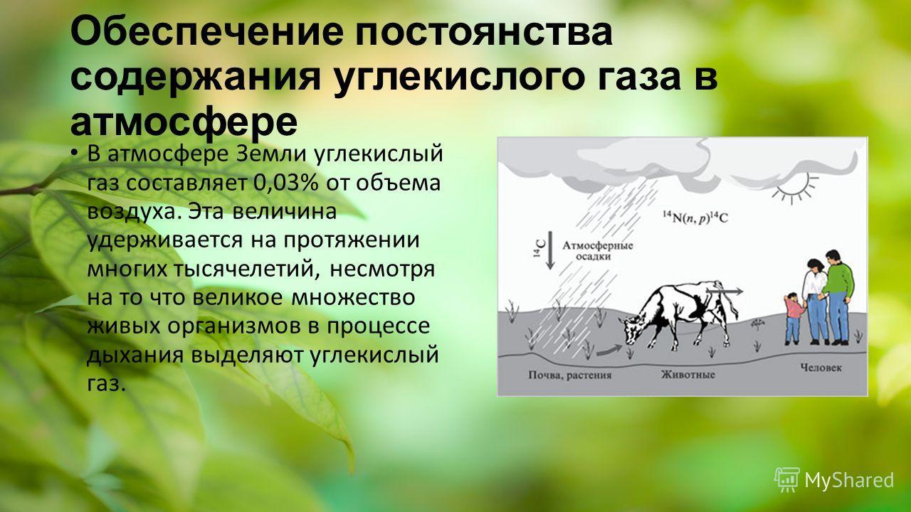 Обеспечение постоянства содержания углекислого газа в атмосфере В атмосфере Земли углекислый газ составляет 0,03% от объема воздуха. Эта величина удерживается на протяжении многих тысячелетий, несмотря на то что великое множество живых организмов в п