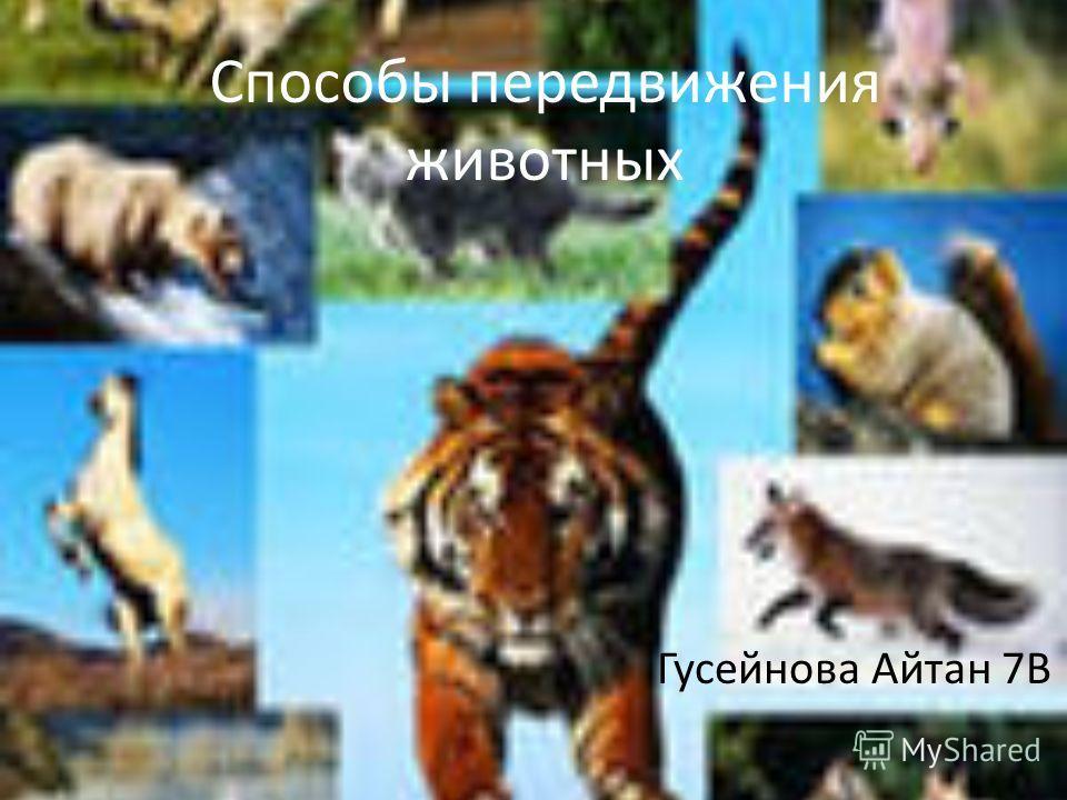 Способы передвижения животных Гусейнова Айтан 7В
