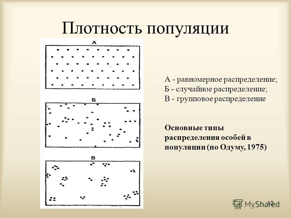 Плотность популяции 12 А - равномерное распределение; Б - случайное распределение; В - групповое распределение Основные типы распределения особей в популяции (по Одуму, 1975)