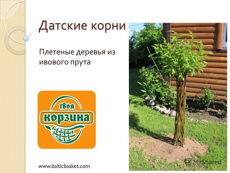 Датские корни Плетеные деревья из ивового прута www.balticbasket.com