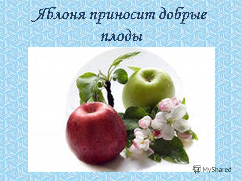Яблоня приносит добрые плоды