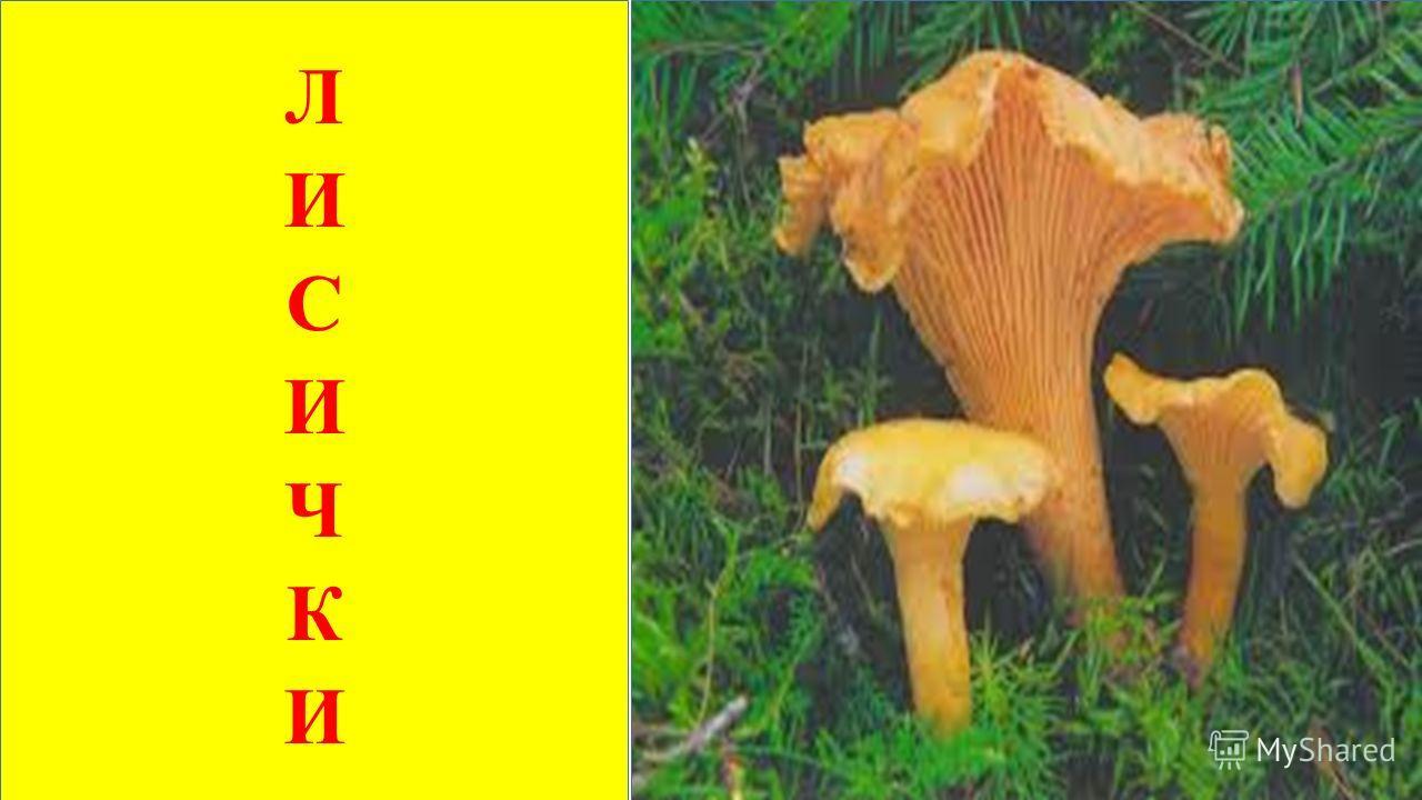 Растут в лесу сестрички Рыжие - … ЛИСИЧКИ