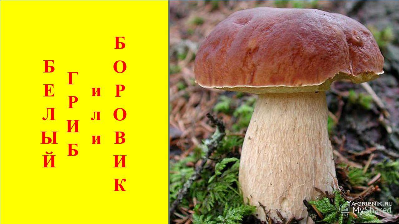 Царь грибов на толстой ножке Самый лучший для лукошка. Он голову держит смело, Потому что гриб он … БЕЛЫЙ