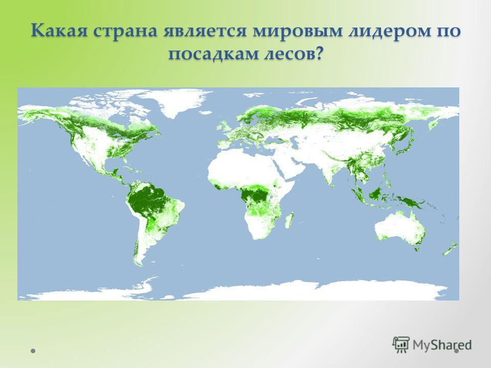 Какая страна является мировым лидером по посадкам лесов?