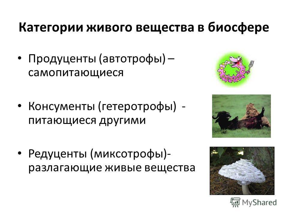 Категории живого вещества в биосфере Продуценты (автотрофы) – самопитающиеся Консументы (гетеротрофы) - питающиеся другими Редуценты (миксотрофы)- разлагающие живые вещества