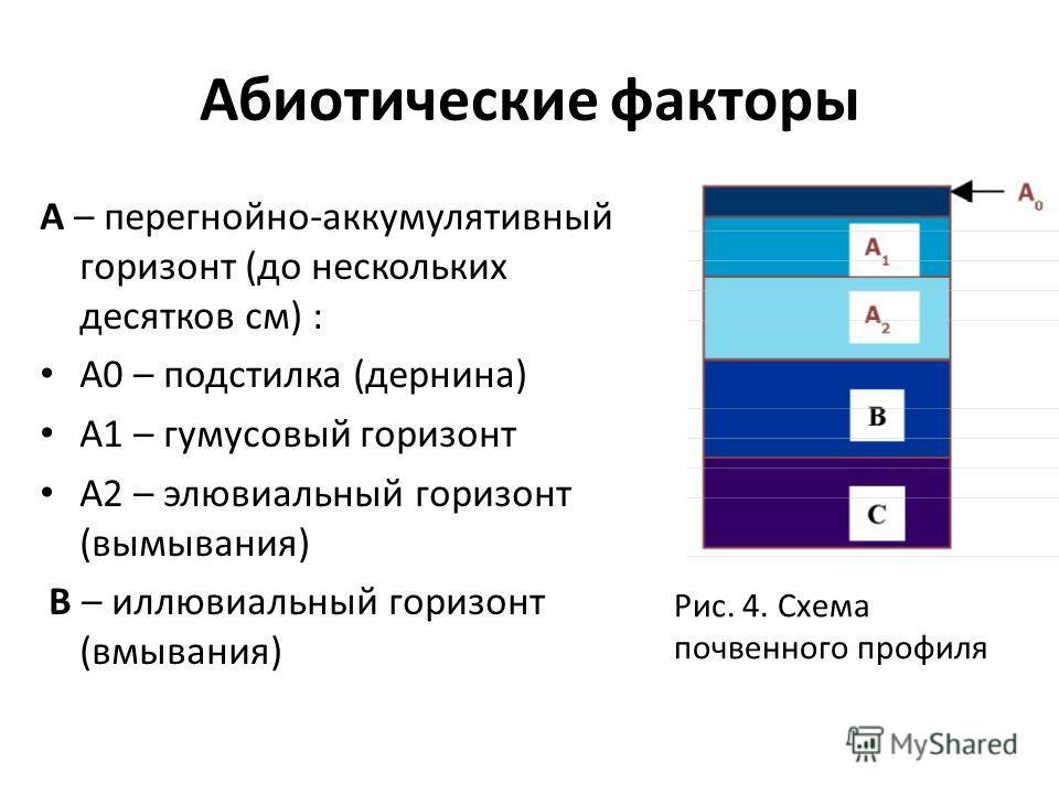 Абиотические факторы А – перегнойно-аккумулятивный горизонт (до нескольких десятков см) : А0 – подстилка (дернина) А1 – гумусовый горизонт А2 – элювиальный горизонт (вымывания) В – иллювиальный горизонт (вмывания) Рис. 4. Схема почвенного профиля