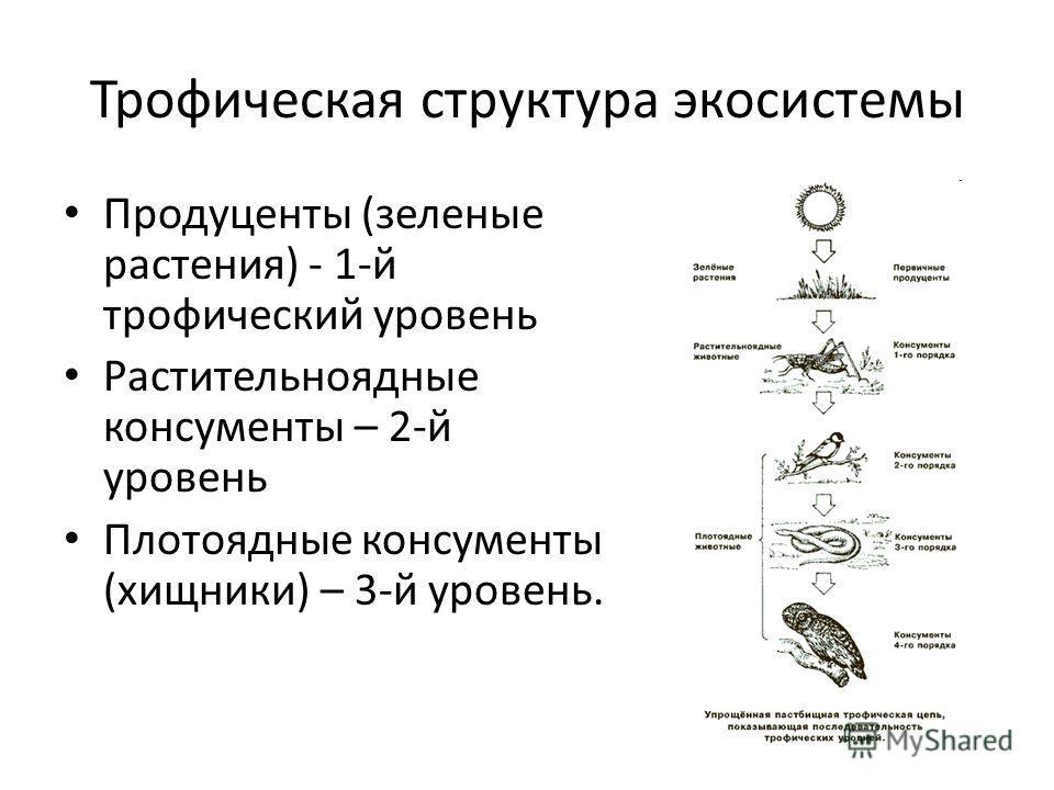 Трофическая структура экосистемы Продуценты (зеленые растения) - 1-й трофический уровень Растительноядные консументы – 2-й уровень Плотоядные консументы (хищники) – 3-й уровень.