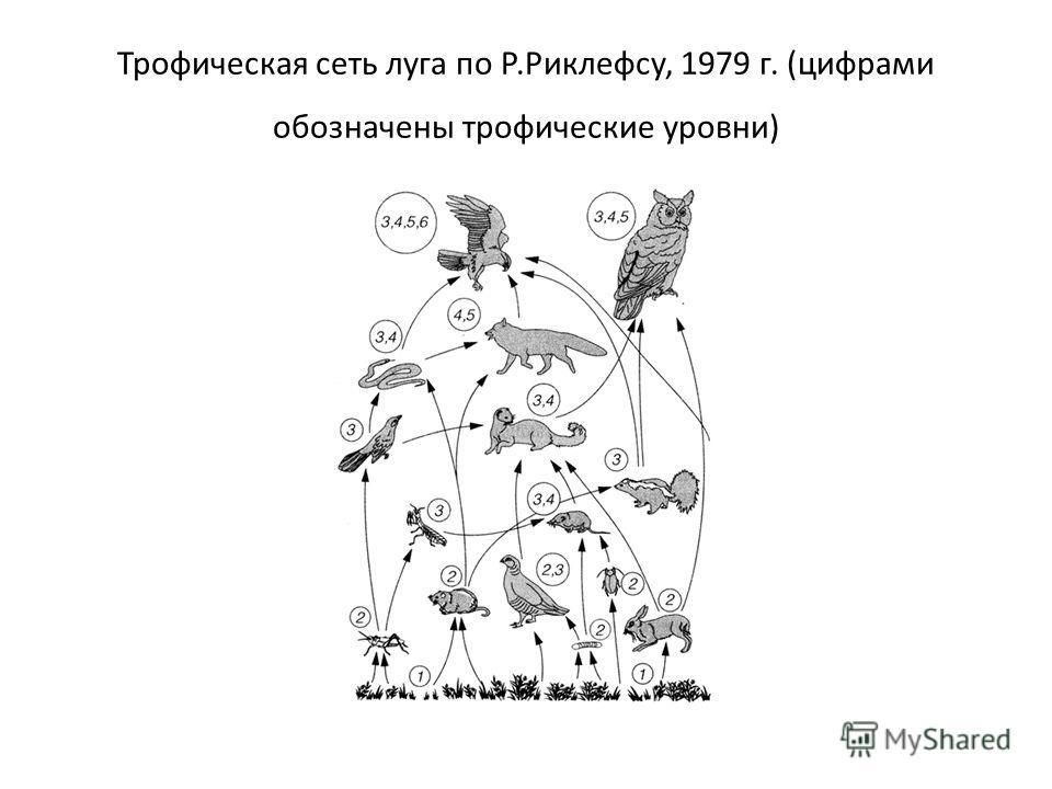 Трофическая сеть луга по Р.Риклефсу, 1979 г. (цифрами обозначены трофические уровни)