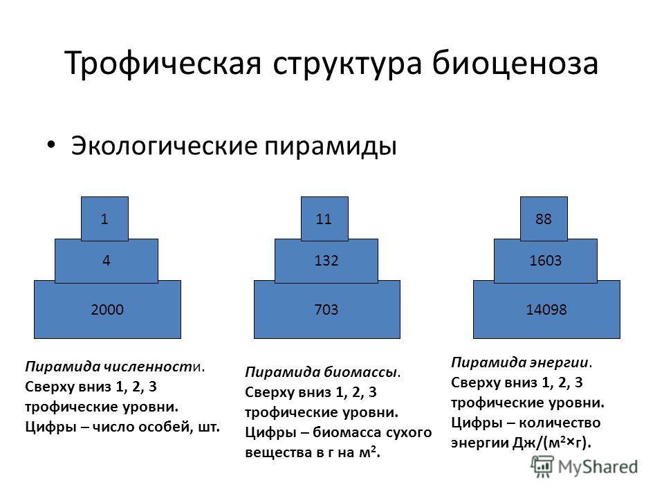 Трофическая структура биоценоза Экологические пирамиды 2000 4 1 703 132 11 14098 1603 88 Пирамида численности. Сверху вниз 1, 2, 3 трофические уровни. Цифры – число особей, шт. Пирамида биомассы. Сверху вниз 1, 2, 3 трофические уровни. Цифры – биомас