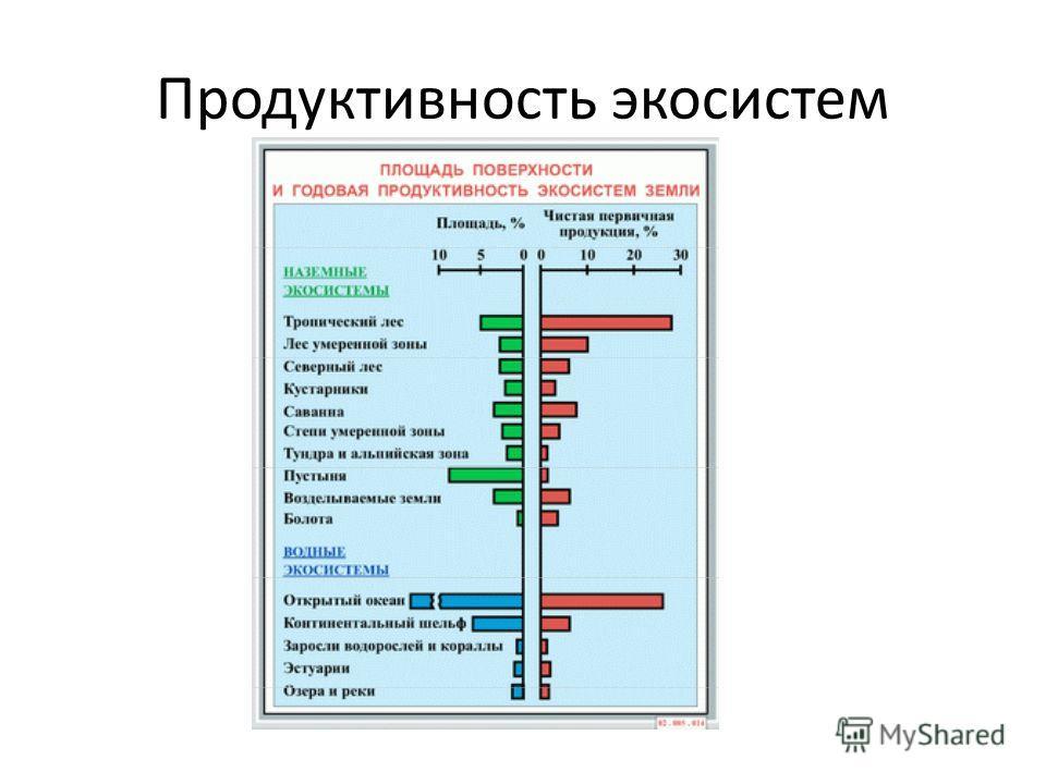 Продуктивность экосистем
