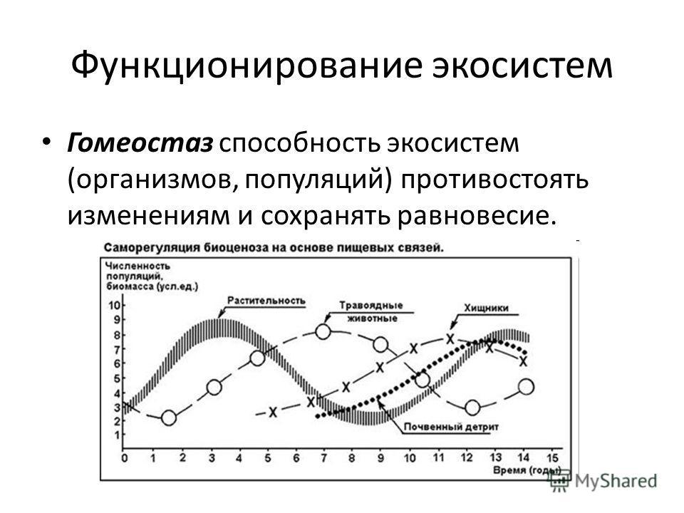 Функционирование экосистем Гомеостаз способность экосистем (организмов, популяций) противостоять изменениям и сохранять равновесие.