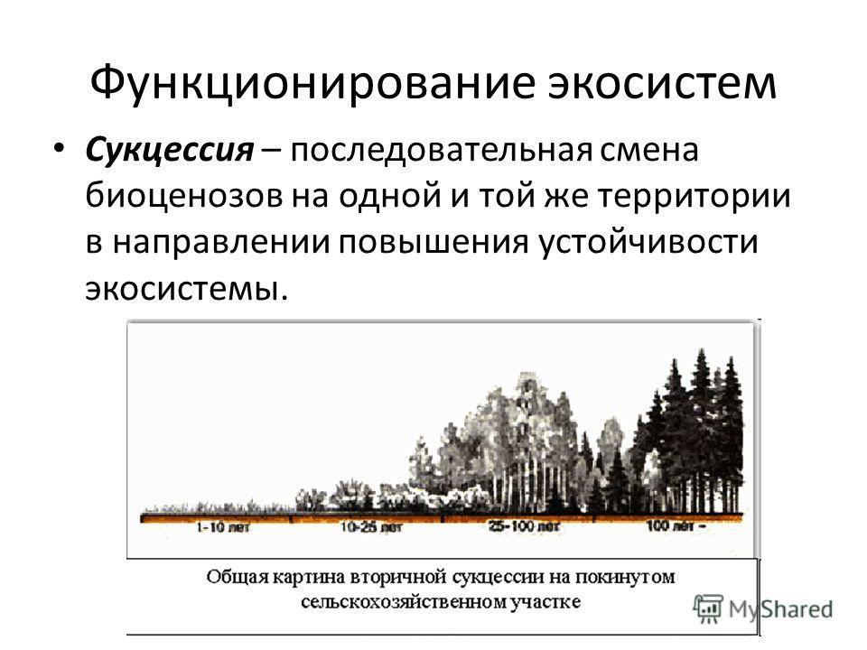 Функционирование экосистем Сукцессия – последовательная смена биоценозов на одной и той же территории в направлении повышения устойчивости экосистемы.