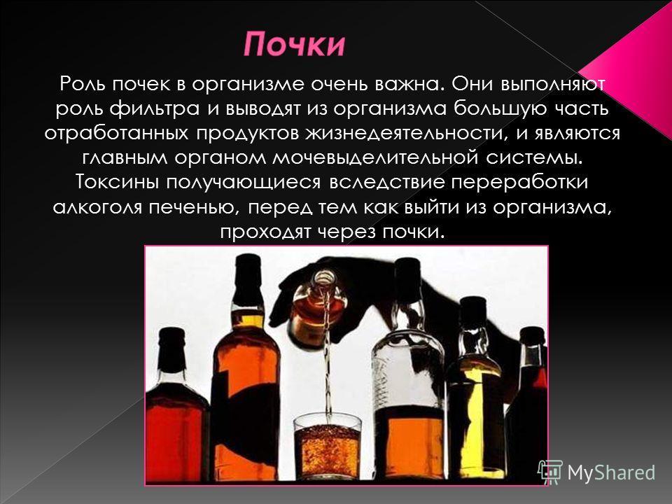 Роль почек в организме очень важна. Они выполняют роль фильтра и выводят из организма большую часть отработанных продуктов жизнедеятельности, и являются главным органом мочевыделительной системы. Токсины получающиеся вследствие переработки алкоголя п