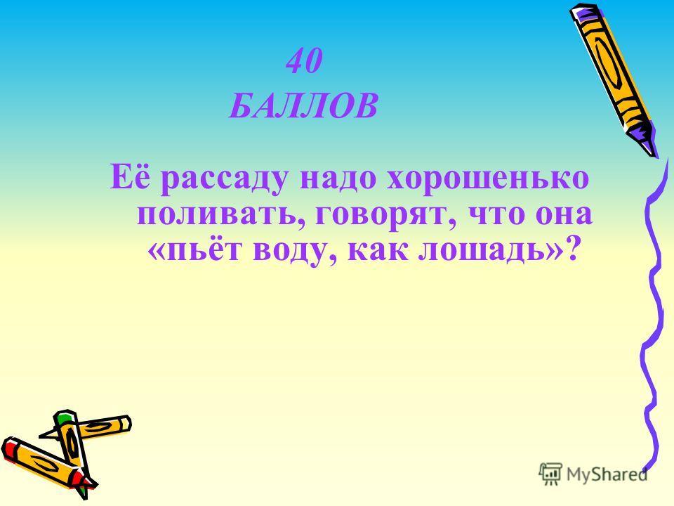 40 БАЛЛОВ Её рассаду надо хорошенько поливать, говорят, что она «пьёт воду, как лошадь»?