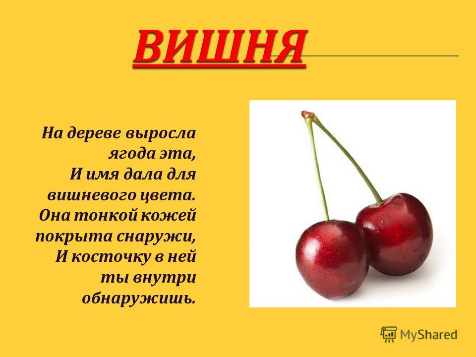 На дереве выросла ягода эта, И имя дала для вишневого цвета. Она тонкой кожей покрыта снаружи, И косточку в ней ты внутри обнаружишь.