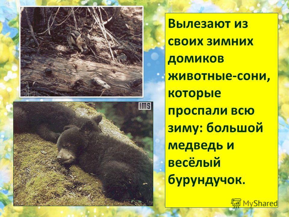 Вылезают из своих зимних домиков животные-сони, которые проспали всю зиму: большой медведь и весёлый бурундучок.