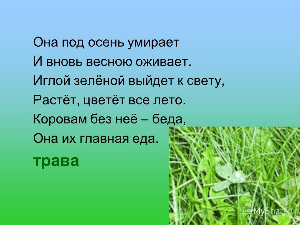 Она под осень умирает И вновь весною оживает. Иглой зелёной выйдет к свету, Растёт, цветёт все лето. Коровам без неё – беда, Она их главная еда. трава