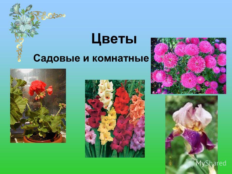 Цветы Садовые и комнатные