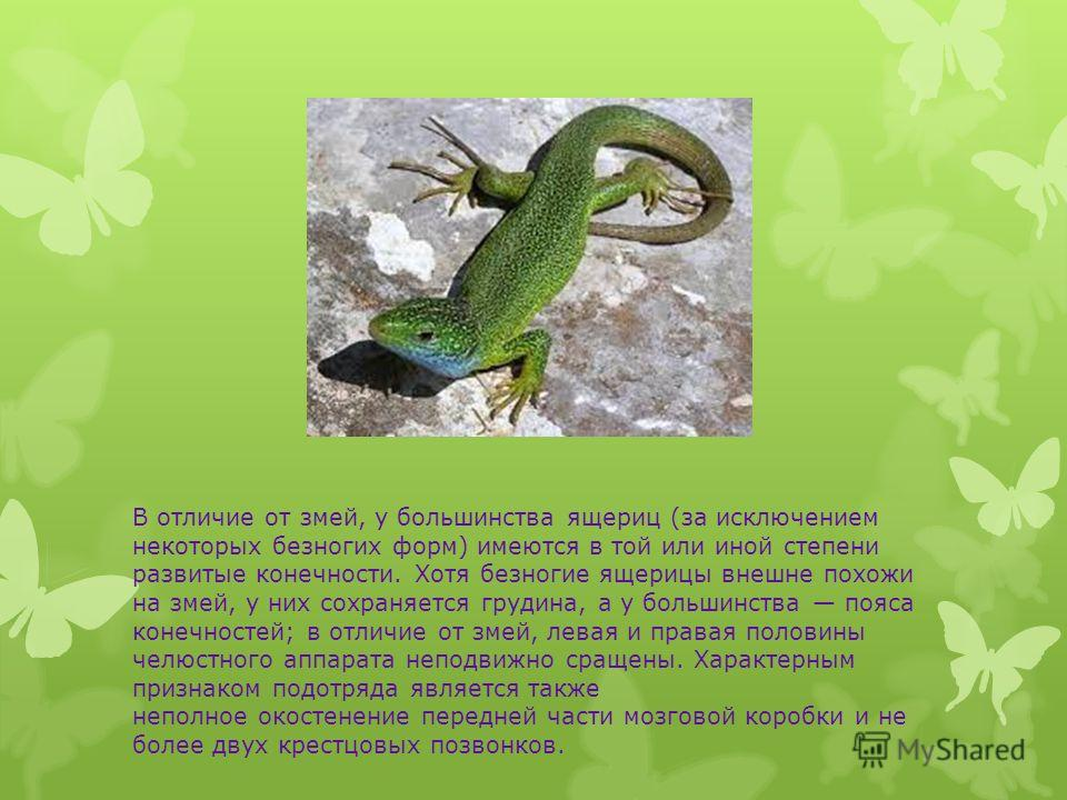 В отличие от змей, у большинства ящериц (за исключением некоторых безногих форм) имеются в той или иной степени развитые конечности. Хотя безногие ящерицы внешне похожи на змей, у них сохраняется грудина, а у большинства пояса конечностей; в отличие