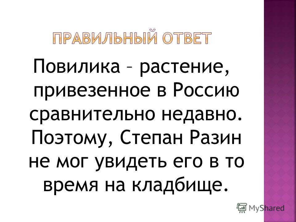 Повилика – растение, привезенное в Россию сравнительно недавно. Поэтому, Степан Разин не мог увидеть его в то время на кладбище.