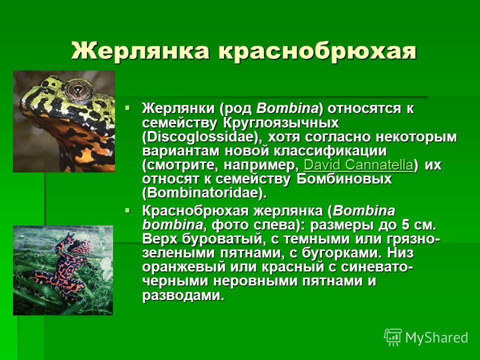 Жерлянка краснобрюхая Жерлянки (род Bombina) относятся к семейству Круглоязычных (Discoglossidae), хотя согласно некоторым вариантам новой классификации (смотрите, например, David Cannatella) их относят к семейству Бомбиновых (Bombinatoridae). Жерлян