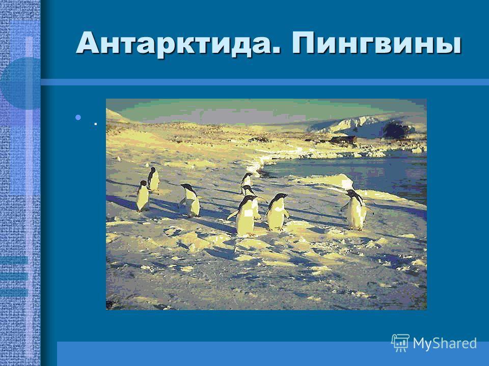 Антарктида. Пингвины.