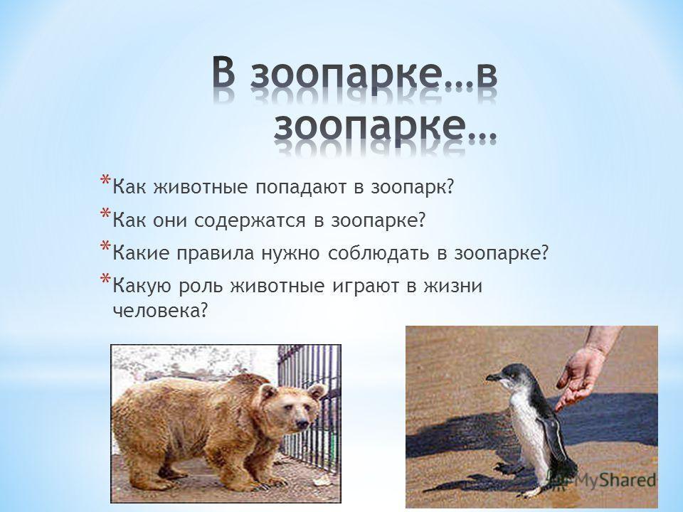 * Как животные попадают в зоопарк? * Как они содержатся в зоопарке? * Какие правила нужно соблюдать в зоопарке? * Какую роль животные играют в жизни человека?