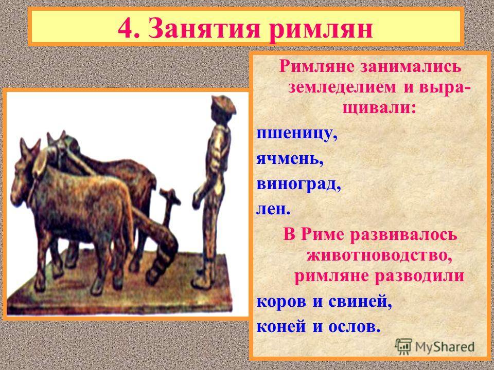 Римляне занимались земледелием и выра- щивали: пшеницу, ячмень, виноград, лен. В Риме развивалось животноводство, римляне разводили коров и свиней, коней и ослов.