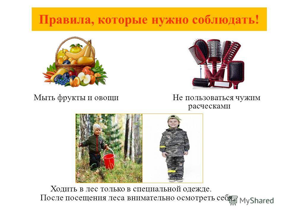 Мыть фрукты и овощи Не пользоваться чужим расческами Ходить в лес только в специальной одежде. После посещения леса внимательно осмотреть себя. Правила, которые нужно соблюдать!