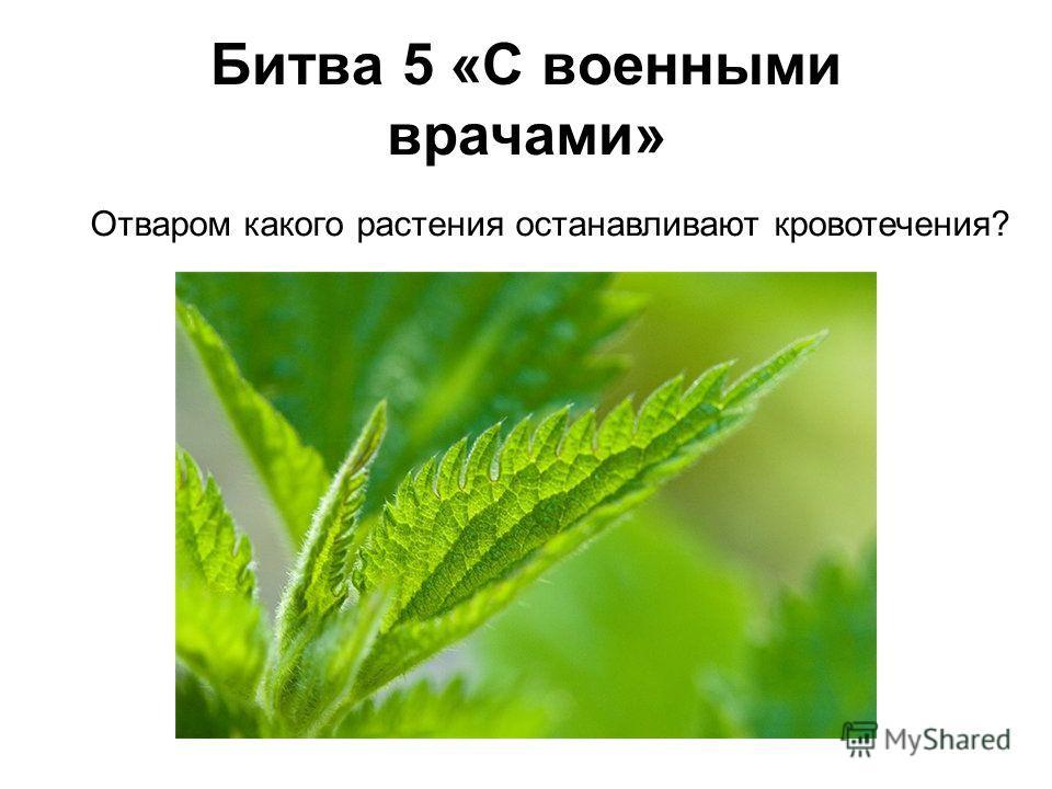 Отваром какого растения останавливают кровотечения? Битва 5 «С военными врачами»