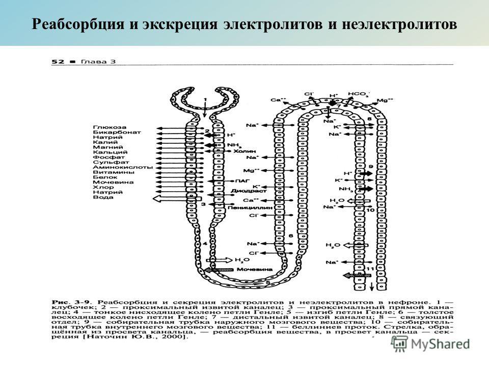 Реабсорбция и экскреция электролитов и неэлектролитов