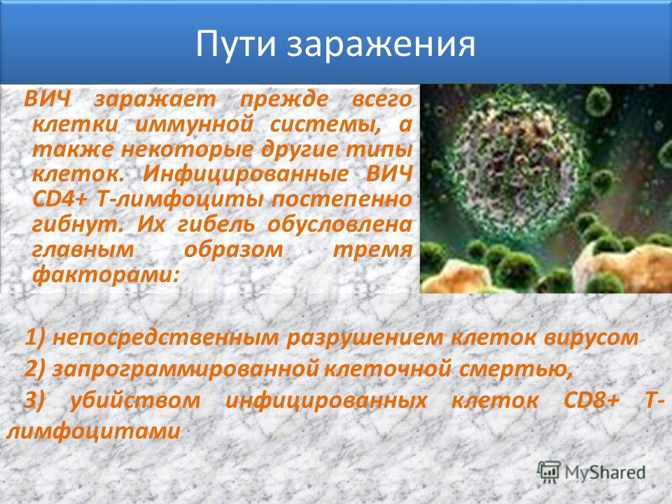 Пути заражения ВИЧ заражает прежде всего клетки иммунной системы, а также некоторые другие типы клеток. Инфицированные ВИЧ CD4+ Т-лимфоциты постепенно гибнут. Их гибель обусловлена главным образом тремя факторами: 1) непосредственным разрушением клет