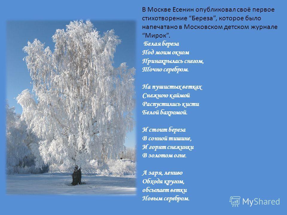 В Москве Есенин опубликовал своё первое стихотворение Береза, которое было напечатано в Московском детском журнале Мирок. Белая береза Под моим окном Принакрылась снегом, Точно серебром. На пушистых ветках Снежною каймой Распустились кисти Белой бахр
