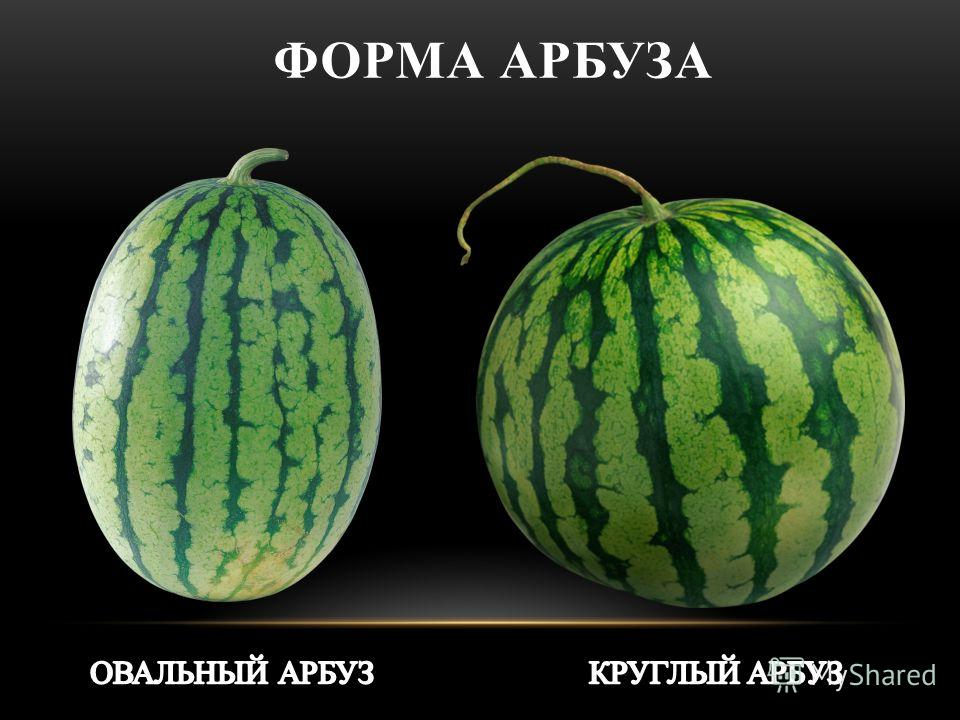 ФОРМА АРБУЗА