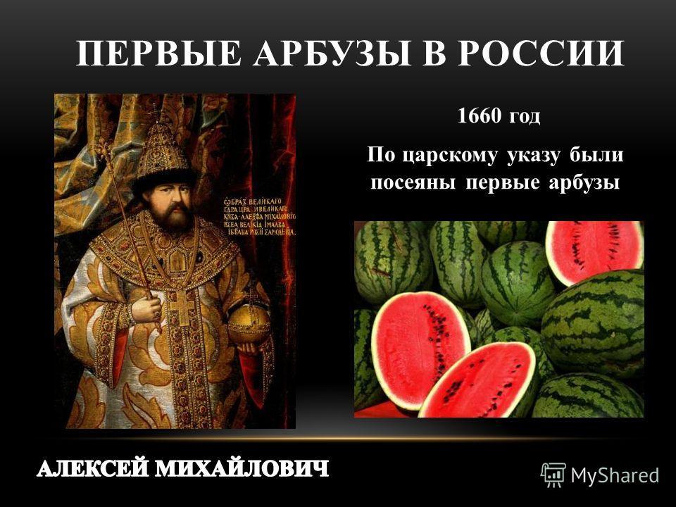 1660 год По царскому указу были посеяны первые арбузы ПЕРВЫЕ АРБУЗЫ В РОССИИ