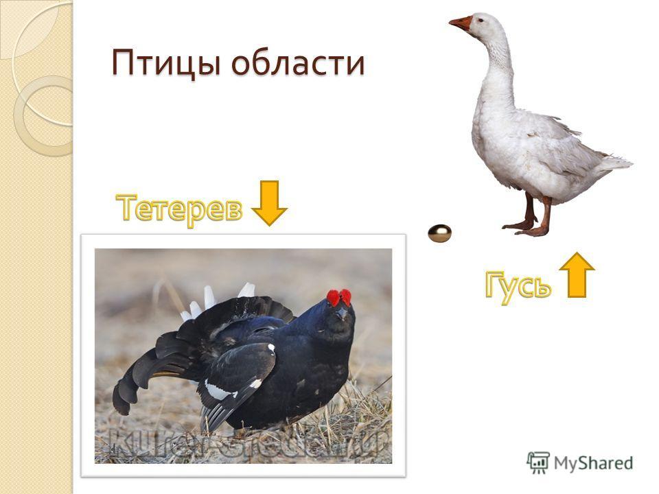 Птицы области