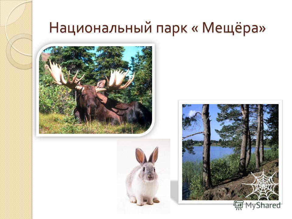 Национальный парк « Мещёра »