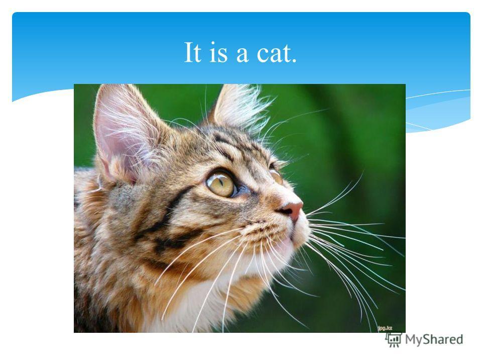 It is a cat.