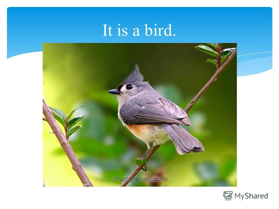 It is a bird.