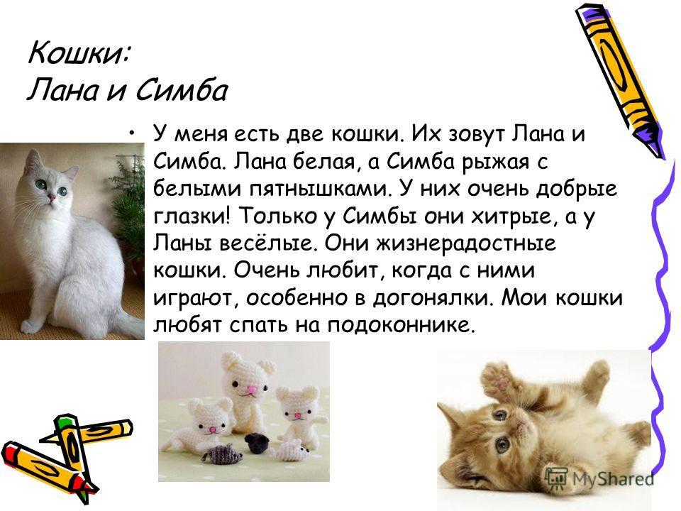 Кошки: Лана и Симба У меня есть две кошки. Их зовут Лана и Симба. Лана белая, а Симба рыжая с белыми пятнышками. У них очень добрые глазки! Только у Симбы они хитрые, а у Ланы весёлые. Они жизнерадостные кошки. Очень любит, когда с ними играют, особе