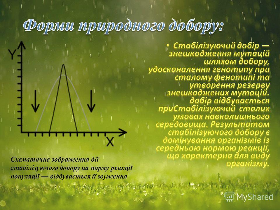 Схематичне зображення дії стабілізуючого добору на норму реакції популяції відбувається її звуження